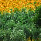 Diagonal Tuscany by andreaminerdo