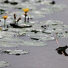 Frogs Life - Danube Delta, Romania by Derek McMorrine