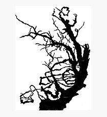 Gnarly Tree Photographic Print