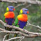 Rainbow Lorikeets. Brisbane, Queensland, Australia. (3) by Ralph de Zilva