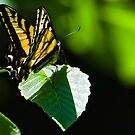 Butterfly in the Forest by David Friederich