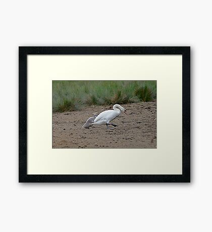 All That Hassle Getting Here, and Only One Bloody Tin Of sweetcorn!!!!! Framed Print