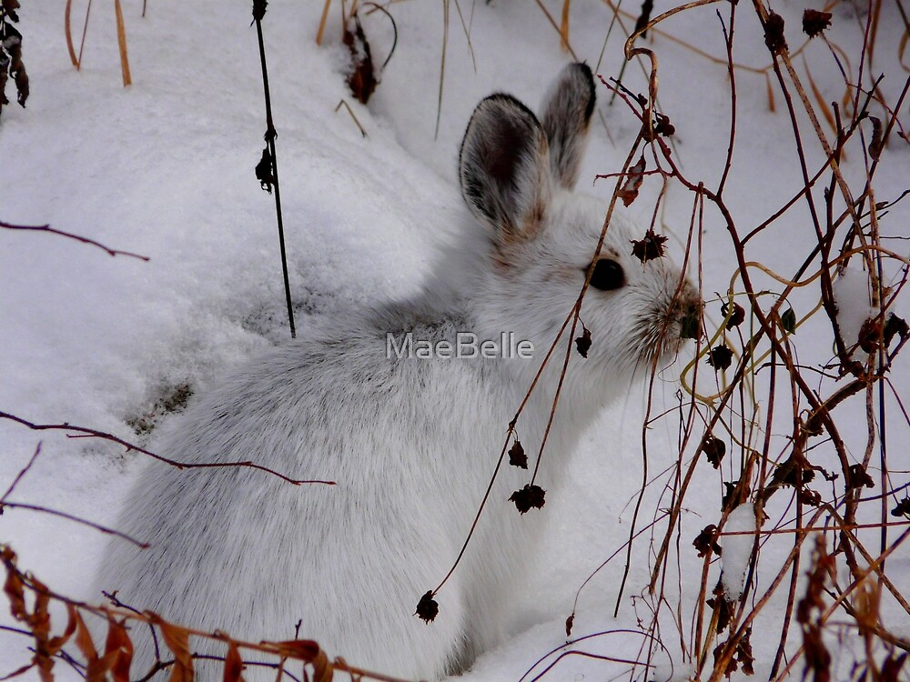 Bush Bunny...HaHa Can't See Me by MaeBelle