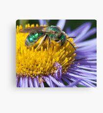 The REAL Green Hornet Canvas Print