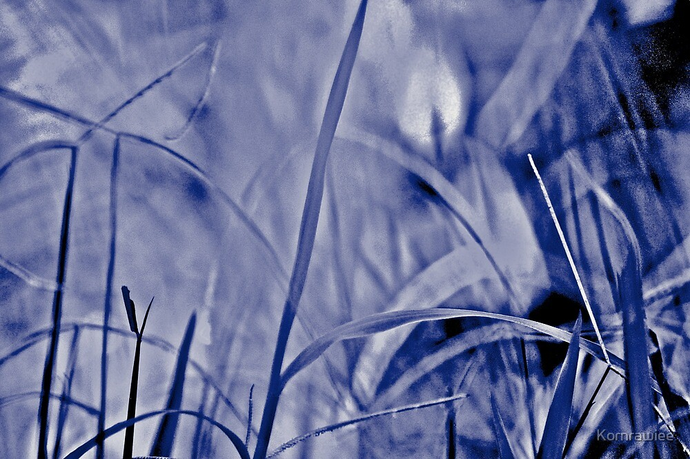 When grasses are blue in my lawn today... by Kornrawiee