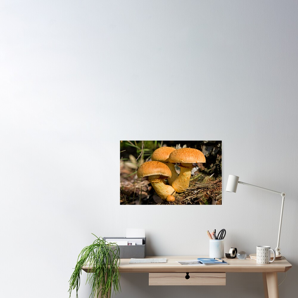 Toadstools Poster