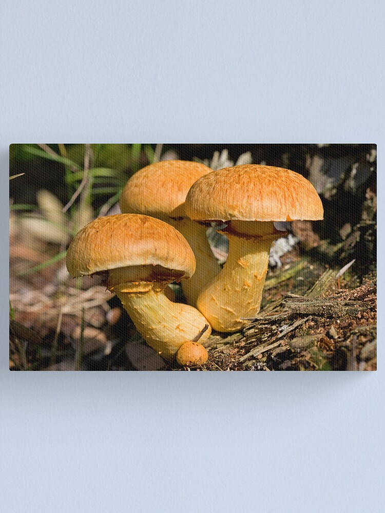 Alternate view of Toadstools Canvas Print