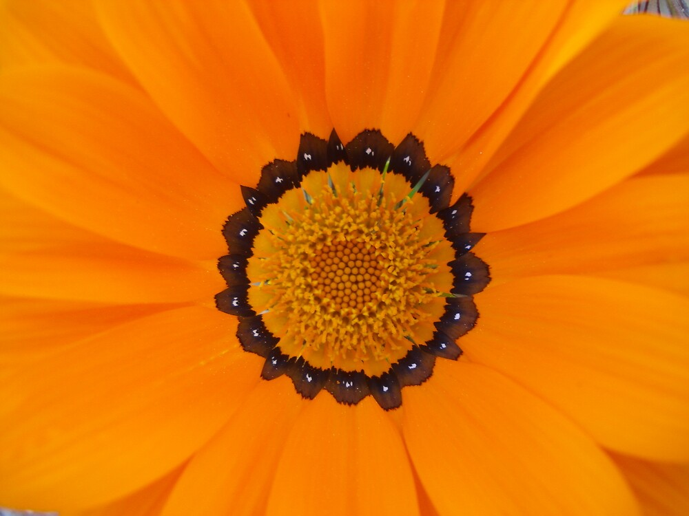 The Colour orange by MarcRusso