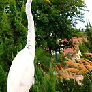 White Heron @ Sea World Orlando by Deb  Badt-Covell