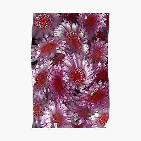 """Crysanthemum Swirl"" Poster"