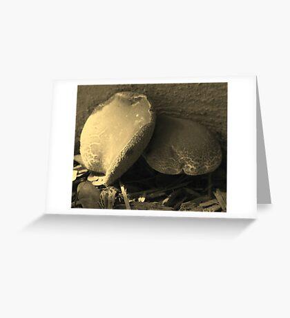 Mushrooms in Sepia - South Florida Greeting Card