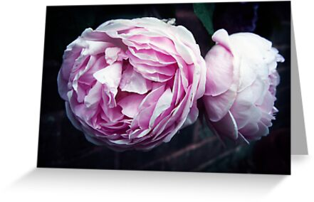 The Wedgwood Rose by Rewards4life