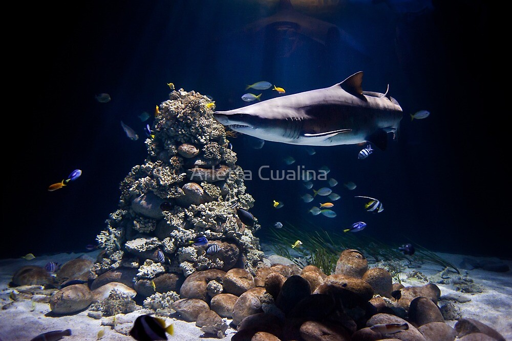 Shark in zoo aquarium by Arletta Cwalina
