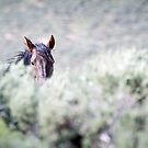 Wild Stallion... Who's Stalking Whom... by A.M. Ruttle