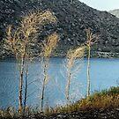 Edge of the Lake by Heather Friedman