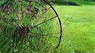 Wagon Wheel by Jessica Liatys