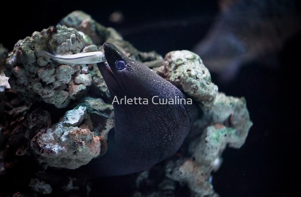 Moray eel eating little fish by Arletta Cwalina
