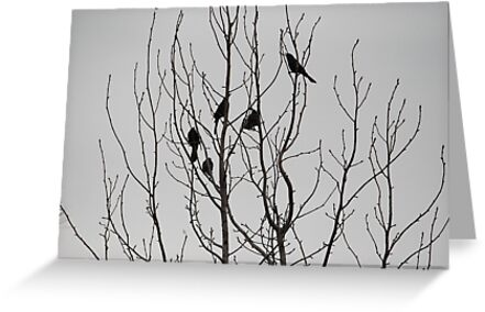 Fall Birds If you like, please purchase, try a cell phone cover thanks by zwrr16