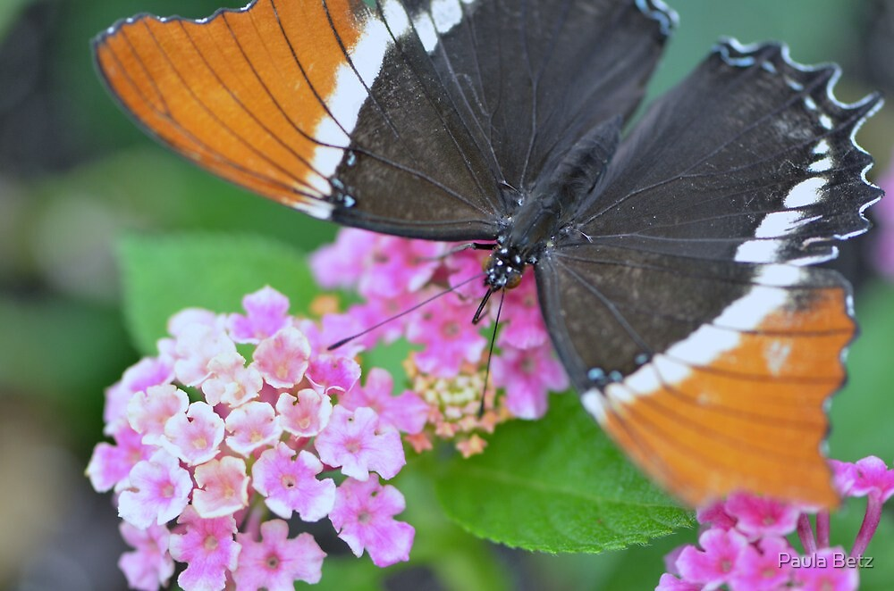 Brown and Black Butterfly on Lantana Flowers by Paula Betz