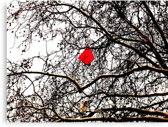 Deflated Red Balloon in a Tree by Vincent J. Newman