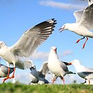 An attack of seagulls by ~ Fir Mamat ~