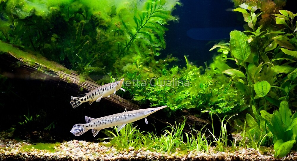 Aquarium fish couple in zoo by Arletta Cwalina