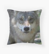 Eurasian Wolf (Canis lupus lupus) Throw Pillow