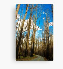 Bushfires Aftermath Canvas Print