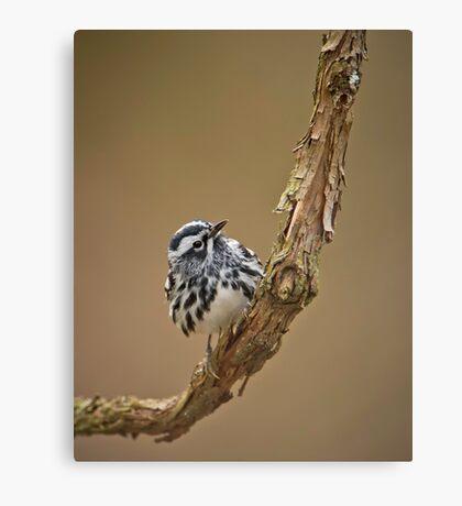 Black & White Warbler Canvas Print