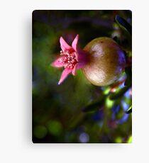 Poignant Pomegranate Canvas Print