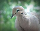 Mourning Dove by G. David Chafin