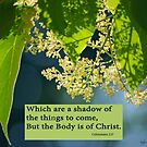 But the Body is of Christ ~ Colossians 2:17 by Robin Clifton