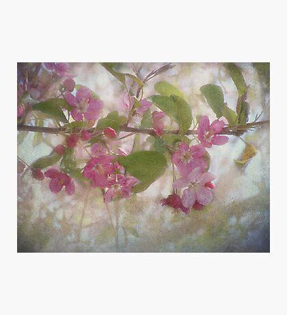 Pretty Pink Blossoms Fotodruck