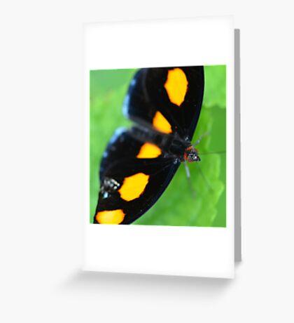 Orange Shoemaker Butterfly Greeting Card