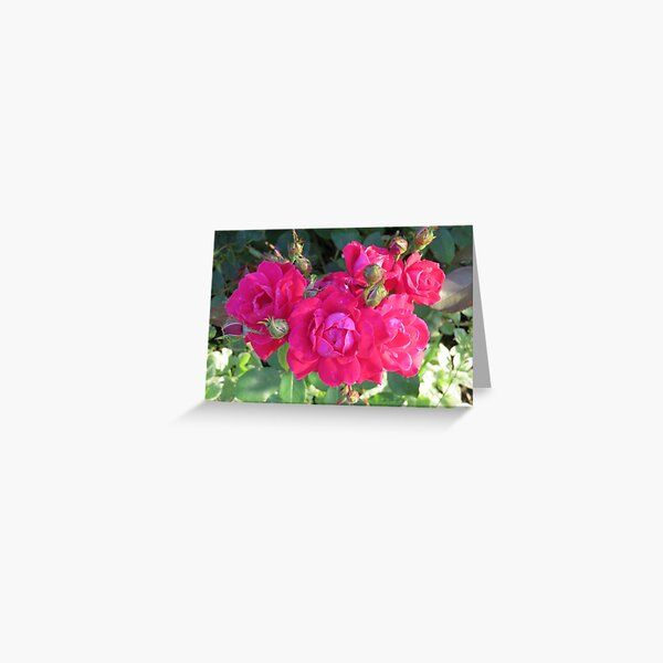 Beautiful old fashioned red roses Greeting Card