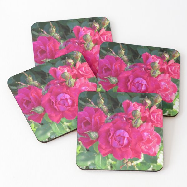 Beautiful old fashioned red roses Coasters (Set of 4)
