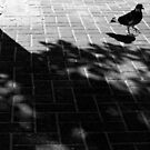 variations on a tree shadow 2 by JudyBJ