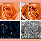 Quadraphonic Rose by David's Photoshop
