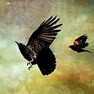 Crow and Red Winged Blackbird Photograph von Peggy Collins