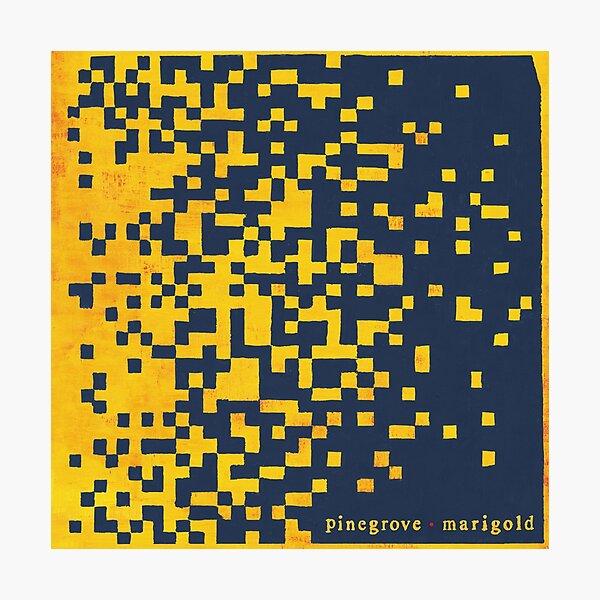 Marigold album Pinegrove Photographic Print