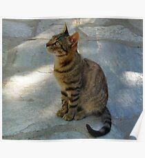 Cat at Greek Taverna Poster