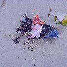 (my) ocean treasures by marella