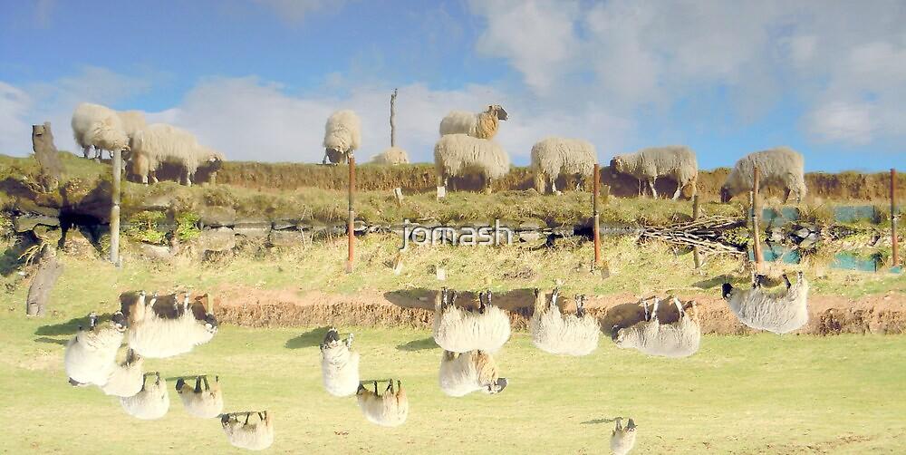 Sheep by jomash