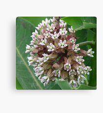 Flower Cluster Leinwanddruck