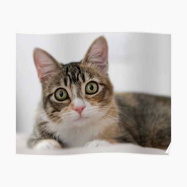 My kitty, Mallory Poster
