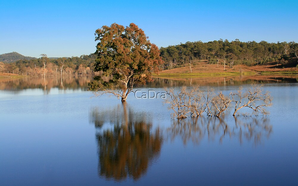 Wyaralong reflection by CaDra