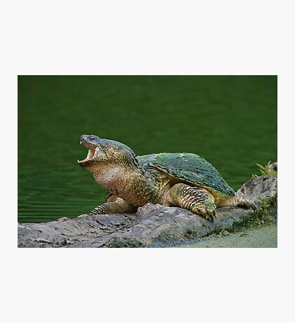 Holy Snapper! Photographic Print