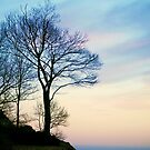Sunset Silhouette by Monica M. Scanlan