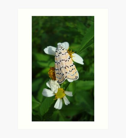 "So delightfully ""bella""!  The beautiful Ornate Bella Moth Art Print"