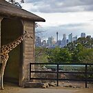 A Zoo with a view by Kat36